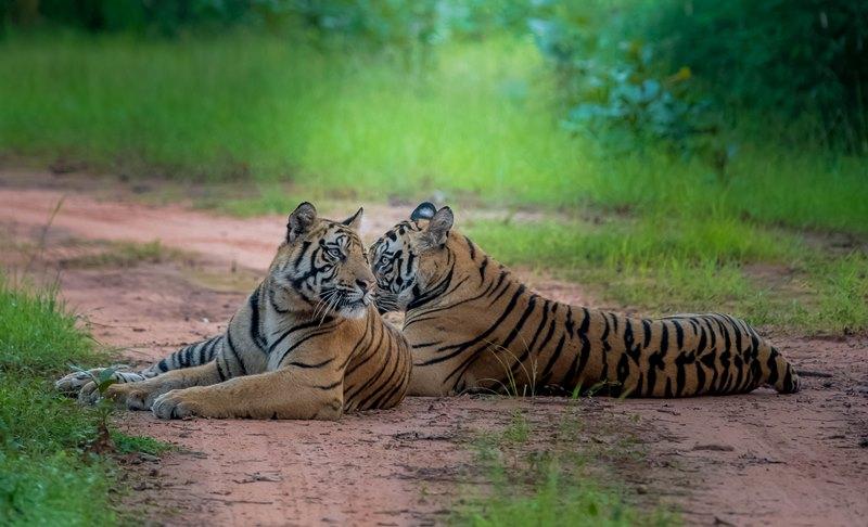 tiger safari tour